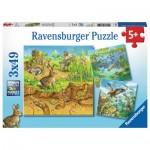 Ravensburger-08050 3 Puzzles - Tiere in ihren Lebensräumen