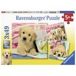 Ravensburger-08065 3 Puzzles - Welpen