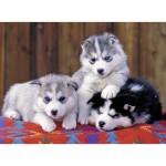Puzzle  Ravensburger-12823 XXL Teile - Huskies
