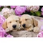 Puzzle  Ravensburger-13235 Süße Hunde im Körbchen