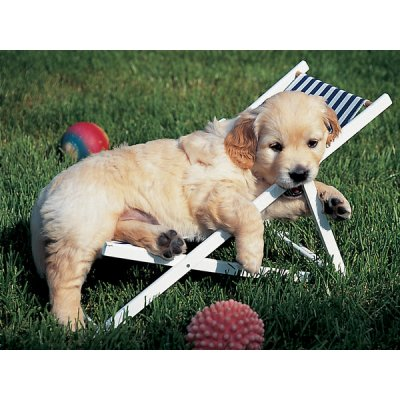 Puzzle Ravensburger-14179 Junger Golden Retriever