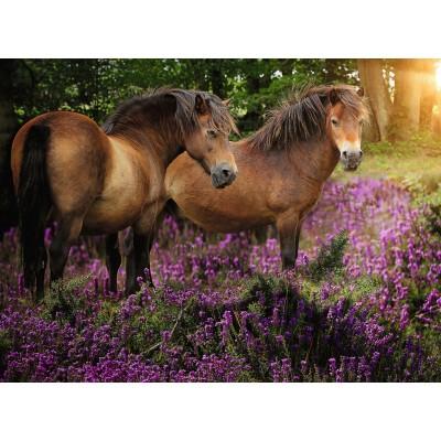 Puzzle  Ravensburger-14813 Ponys in der Heide