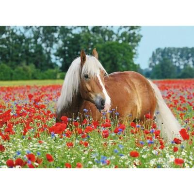 Puzzle  Ravensburger-14831 Pferd im Mohnfeld