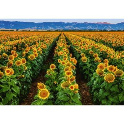 Puzzle  Ravensburger-15288 Feld von Sonnenblumen