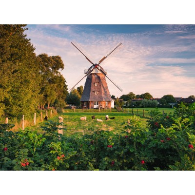 Puzzle  Ravensburger-16223 Windmühle an der Ostsee