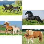 Schmidt-Spiele-55588 Puzzle 26 und 48 Teile - Puzzle-Box 4 Puzzle: Pferde