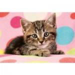 Puzzle  Schmidt-Spiele-56249 Süßes Katzenkind