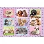 Puzzle  Schmidt-Spiele-56268 Meine Tierfreunde