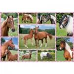 Puzzle  Schmidt-Spiele-56269 Pferdeträume