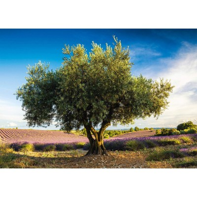 Puzzle  Schmidt-Spiele-58357 Olivenbaum in der Provence