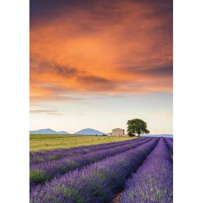 Puzzle  Schmidt-Spiele-58364 Lavendelfeld, Provence