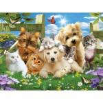 Puzzle  Sunsout-54923 XXL Teile - Pups n Kittens