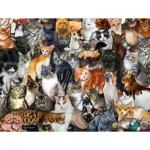 Puzzle  Sunsout-60934 Cat Collage