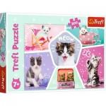 Puzzle  Trefl-13247 Katzen