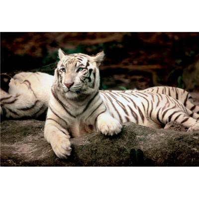 Puzzle  Trefl-26075 Bengalischer Tiger