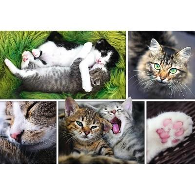 Puzzle Trefl-26145 Collage - Die Katzen