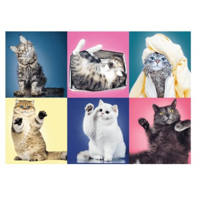 Puzzle  Trefl-37377 Kätzchen