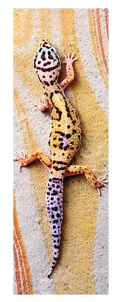 Puzzle  Trefl-75006 Basking Lizard